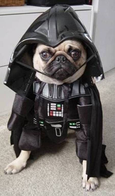 darthpuppy